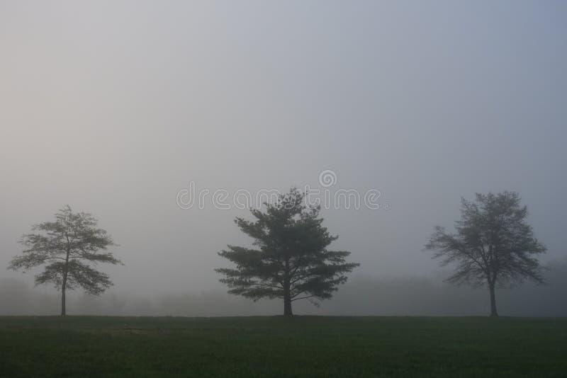 Mistige Bomen royalty-vrije stock afbeeldingen