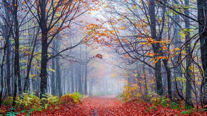 Mistige bosweg stock fotografie