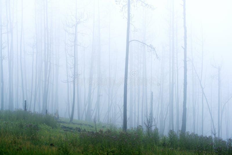 Mistige Dag in het Bos bij de Zwarte Heuvels royalty-vrije stock foto's