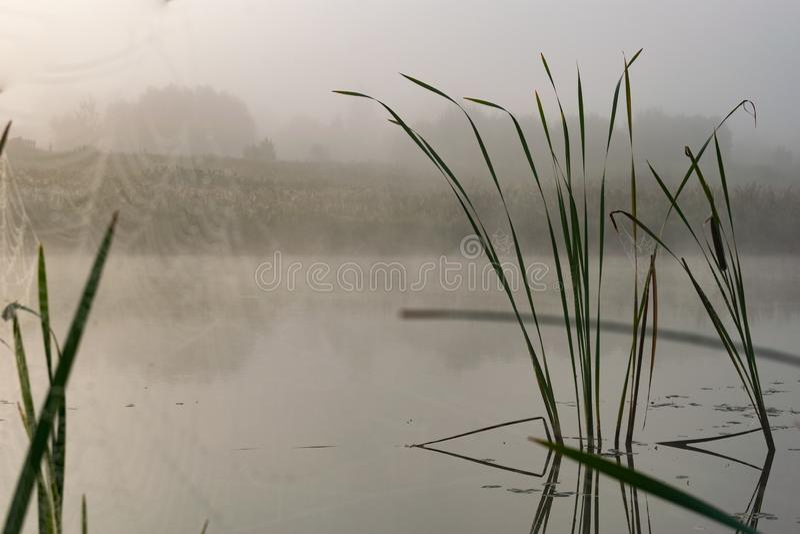 Mistige dageraad op het meer stock foto's