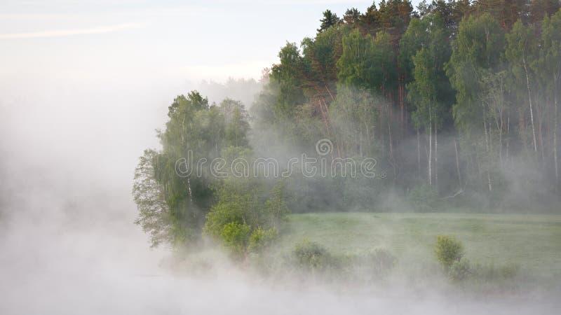 Mistige de zomerochtend met birdsong stock foto's