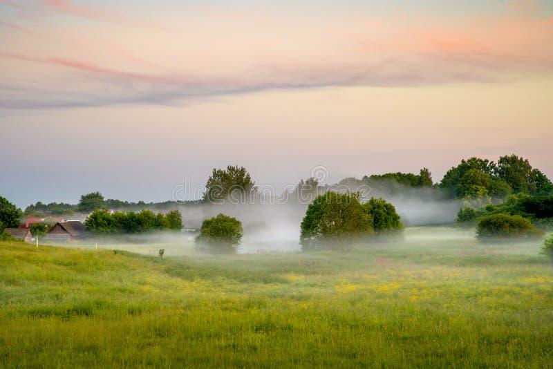 Mistige de zomerochtend op weide stock fotografie