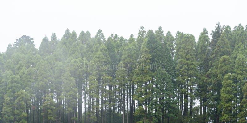 Mistige donkere bos zwart-wit achtergrond, royalty-vrije stock afbeelding