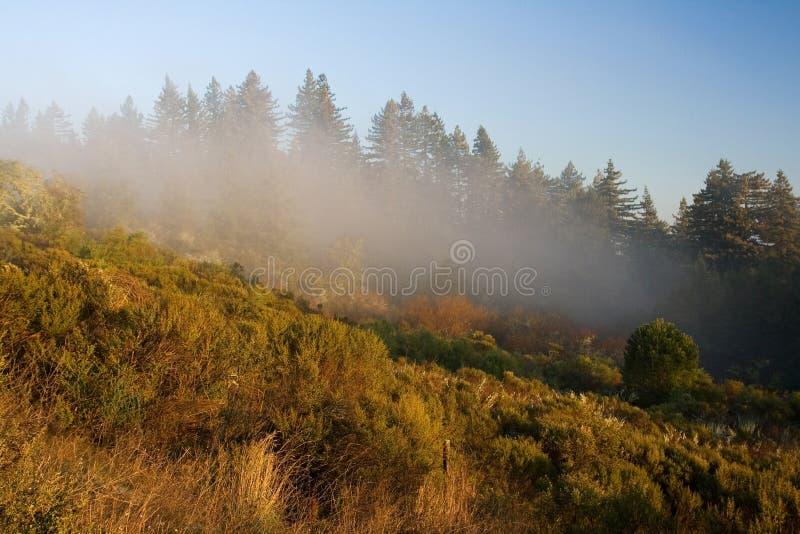 Mistige Heuvel stock afbeeldingen