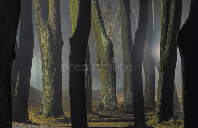 Mistige nacht in de recente herfst royalty-vrije stock foto's