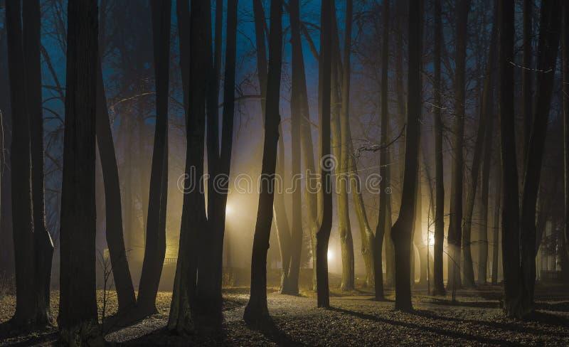 Mistige nacht in de recente herfst royalty-vrije stock fotografie