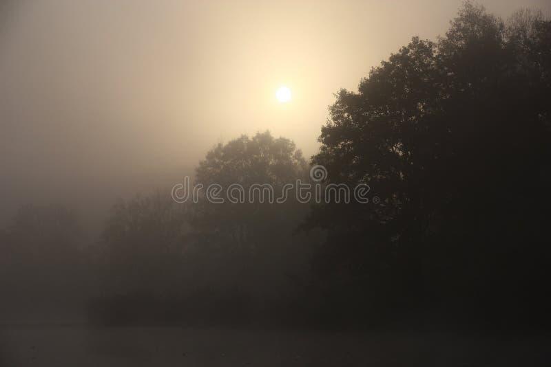 Mistige ochtend stock fotografie