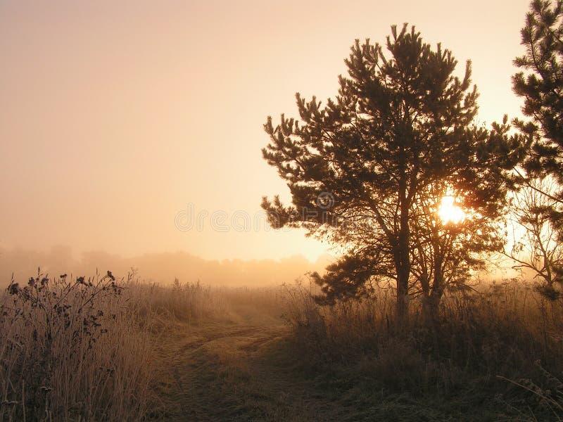 Mistige ochtend. stock foto's