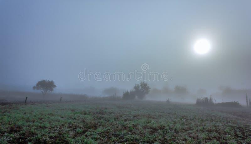 Mistige ochtend stock afbeeldingen