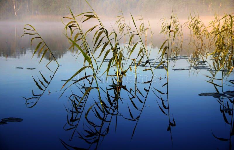 Mistige ochtend door het meer, II royalty-vrije stock afbeeldingen