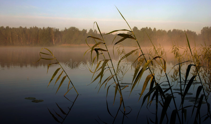 Mistige ochtend door het meer, III royalty-vrije stock afbeelding