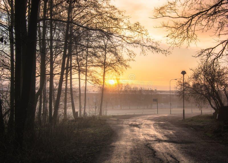 Mistige Ochtend en nevelig bos en zonsopgang in Gothenburg Zweden stock foto's