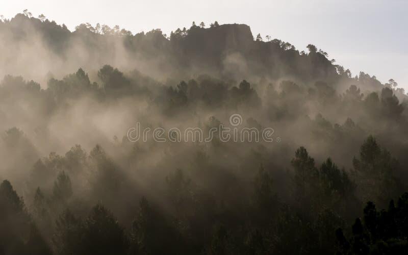 Mistige ochtend in het bergbos royalty-vrije stock afbeelding
