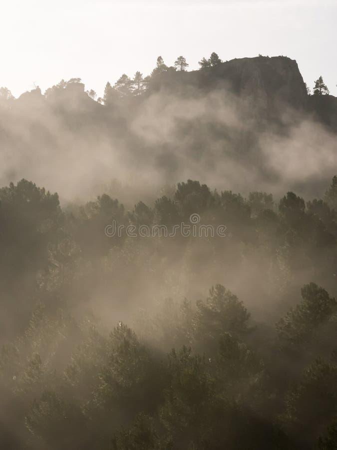 Mistige ochtend in het bergbos royalty-vrije stock fotografie