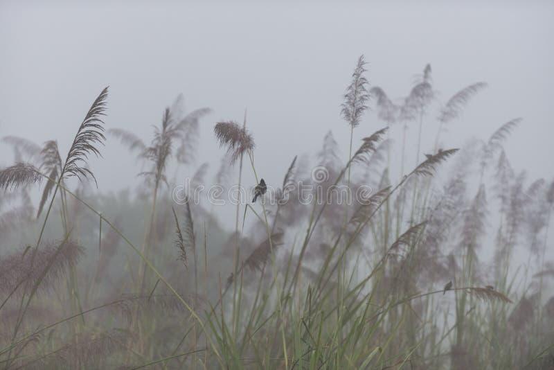 Mistige ochtend in het nationale park Chitwan royalty-vrije stock afbeeldingen