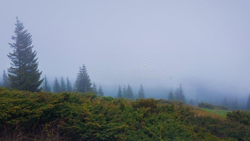 Mistige ochtend in Karpatische bergen met naaldbos in de nevel Somber seizoengebonden nevelig landschap royalty-vrije stock foto