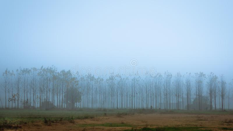 Mistige Ochtend met bomen, Punjab, India stock afbeelding