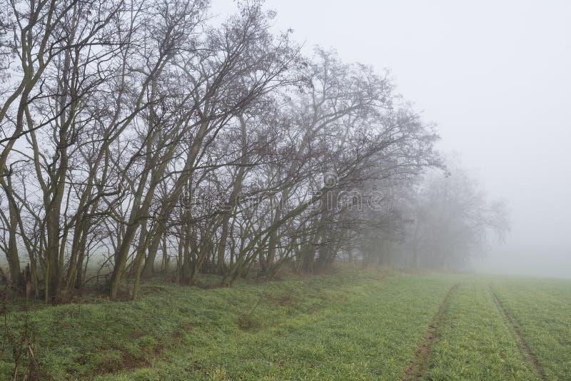 Mistige ochtend op het gebied met bomen in daling royalty-vrije stock afbeelding