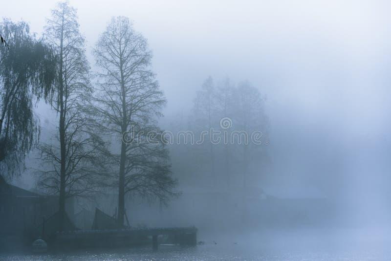 Mistige ochtend op het meer stock afbeeldingen