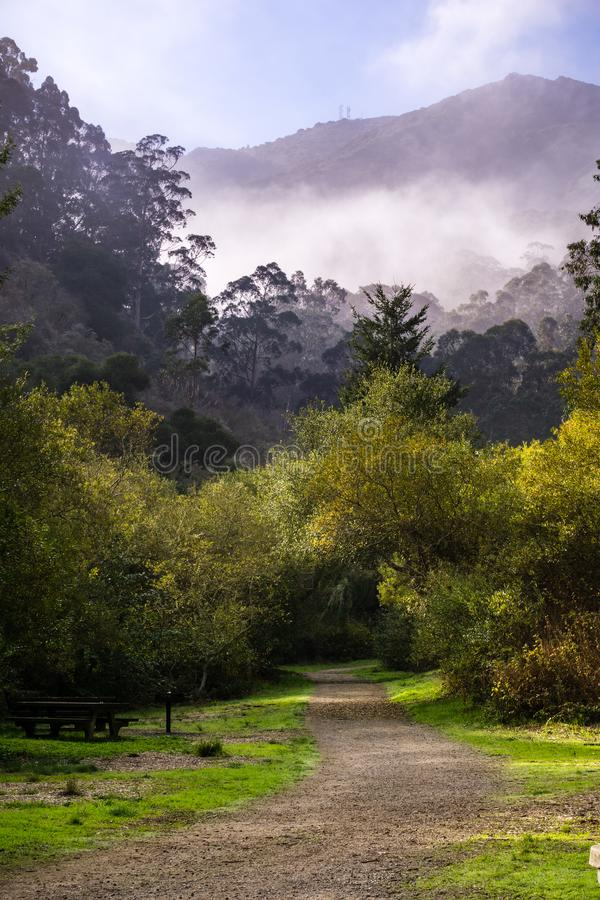 Mistige ochtend, San Pedro Valley County Park, de baaigebied van San Francisco, Californië royalty-vrije stock fotografie