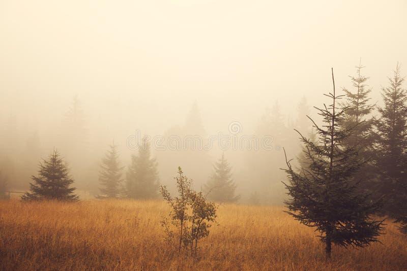 Mistige ochtendweide stock afbeeldingen