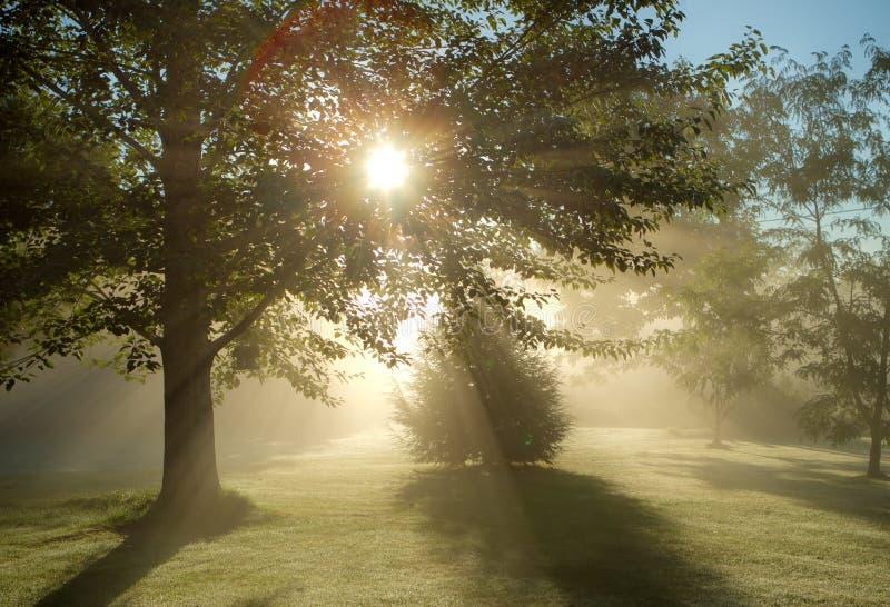Mistige ochtendzon stock afbeeldingen
