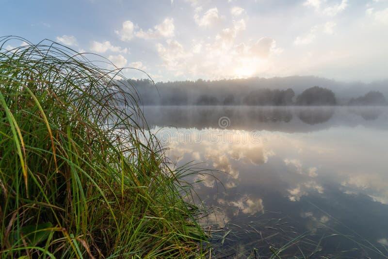Mistige oever van het meer bij zonsopgang in de Europese zomer royalty-vrije stock foto's