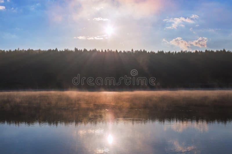 Mistige rivieroever bij de zomerzonsopgang met bosmuur stock foto