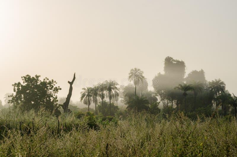 Mistige vroege ochtend met zonsopgang bij wildernis met palmen en weelderig gras in Gambia, West-Afrika royalty-vrije stock afbeelding