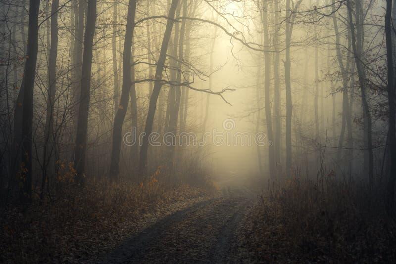 Mistige weg in bos/Weg aan licht door een donker koud bos stock fotografie