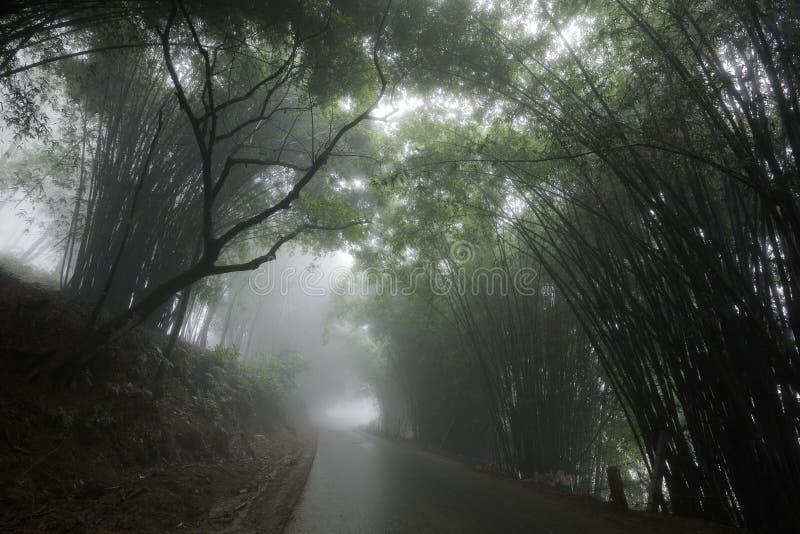 Mistige weg die door bomen wordt geflankeerd royalty-vrije stock foto's