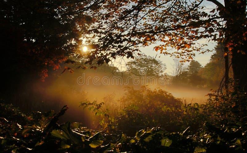 Mistige Weide Autumn Sunrise stock foto's