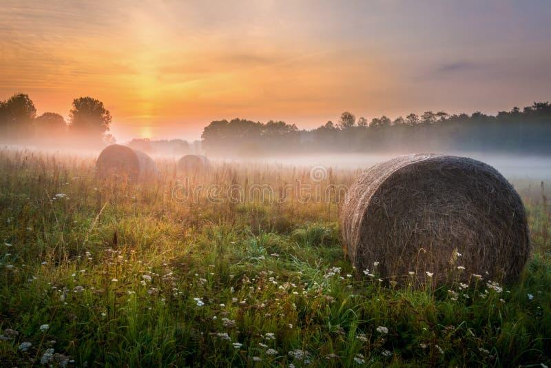 Mistige Weide in het gebied van Lublin stock afbeelding