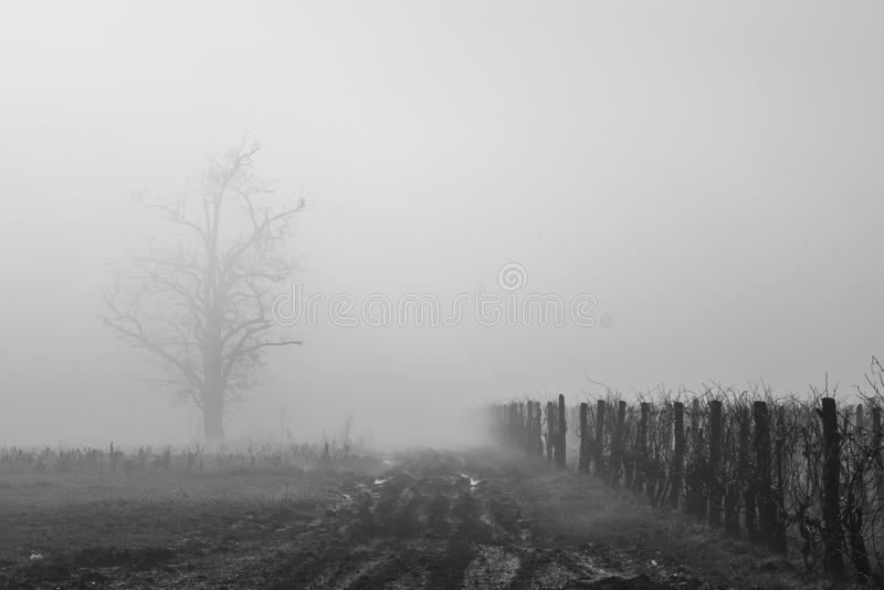 Mistige Wijngaard stock afbeeldingen
