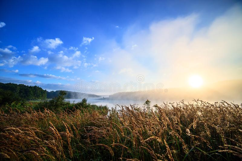 Mistige wilde rivieroever bij zonsopgang in de zomer royalty-vrije stock foto's
