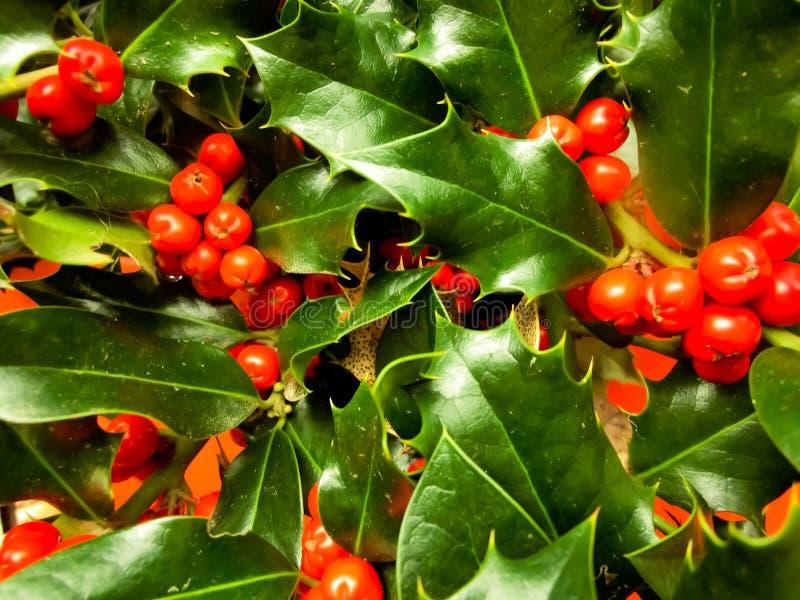 mistletoe fotografia stock