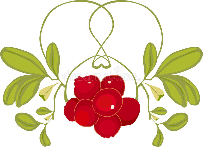 mistletoe royaltyfri foto