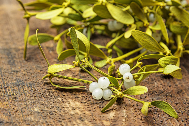 Mistletoe. Branch on a wooden background stock photography