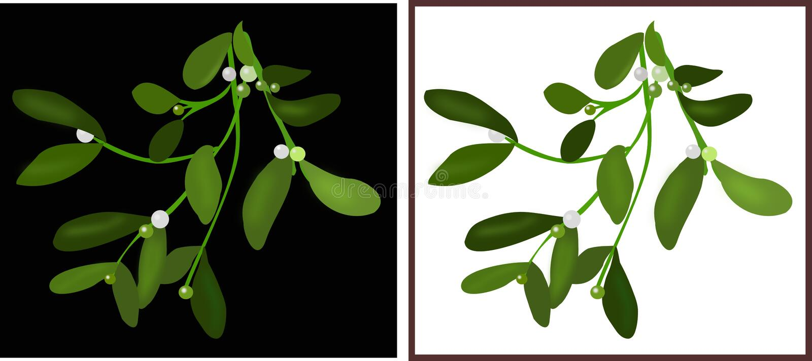 Mistletoe branch. Illustration of a branch of mistletoe in white and black backgrounds stock illustration