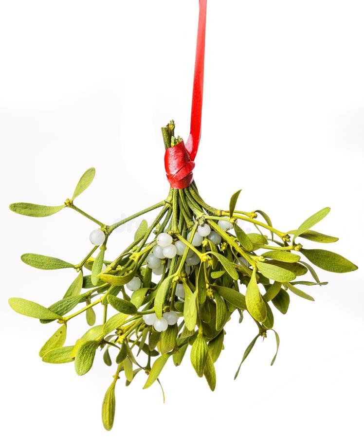 Mistletoe branch royalty free stock photos