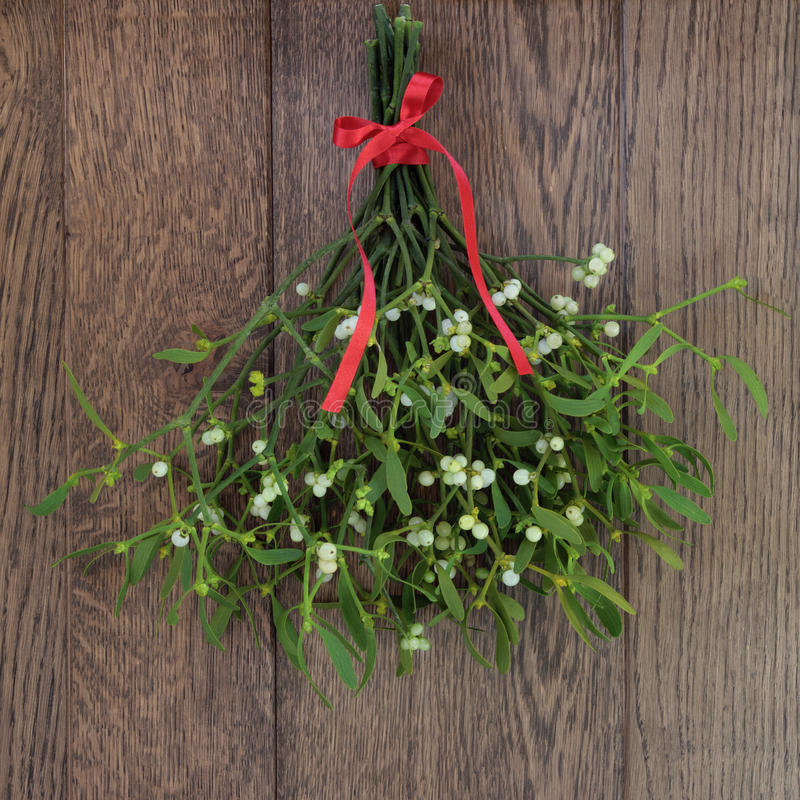 Mistletoe stock photography