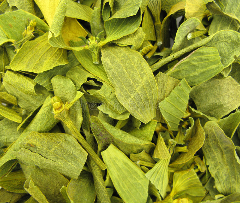 Download Mistletoe dried leaves stock image. Image of album, mistletoe - 10662477