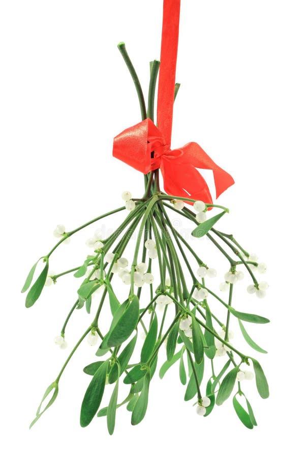 Mistletoe sprigs royalty free stock photo