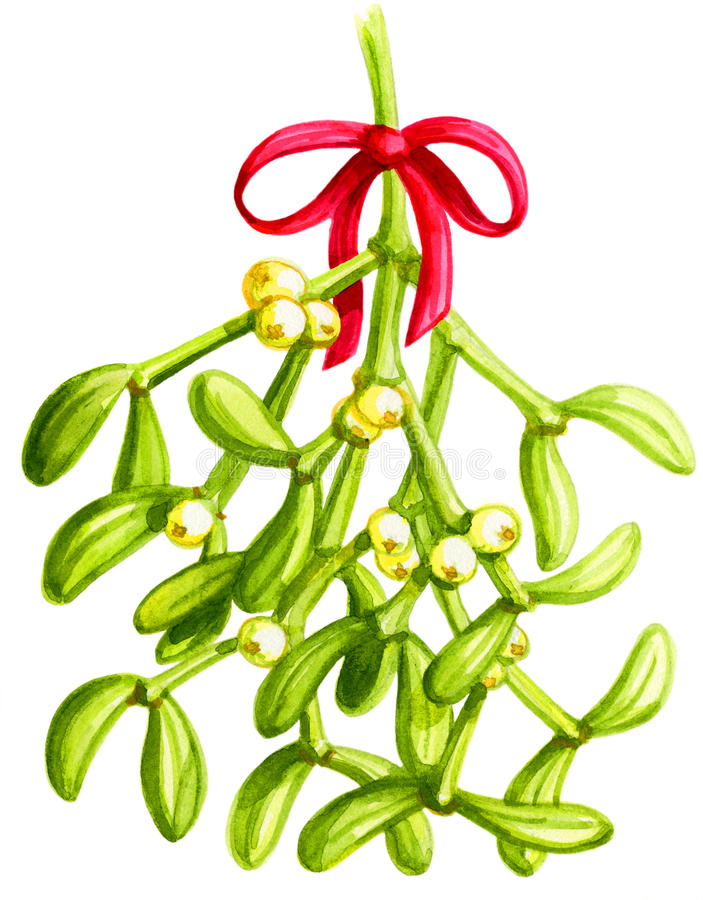 Mistletoe Watercolor. Gouache illustration of a sprig of mistletoe vector illustration