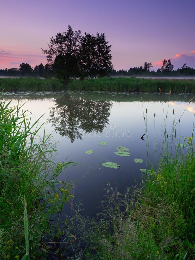 mistmorgon över floden arkivfoto