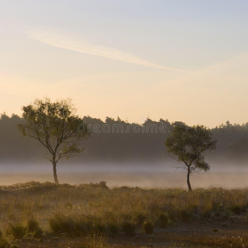 mistmorgon arkivfoton
