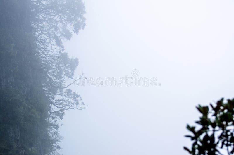 Mistpijnboom in Huangshan-Berg royalty-vrije stock afbeeldingen