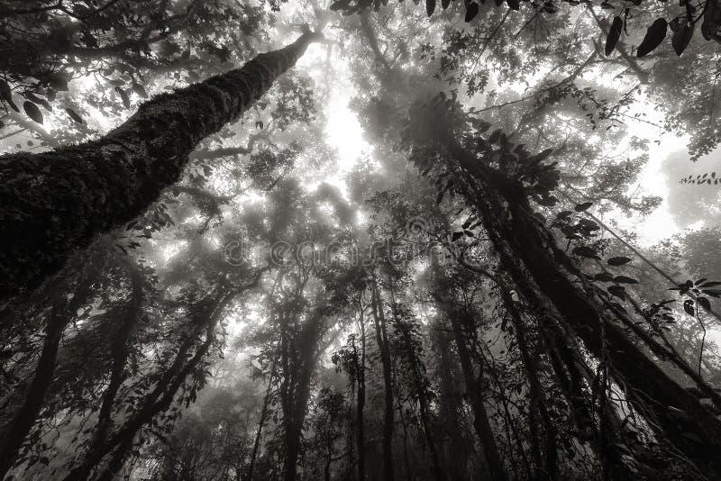 Mistrainskog i svart och vitt royaltyfri fotografi