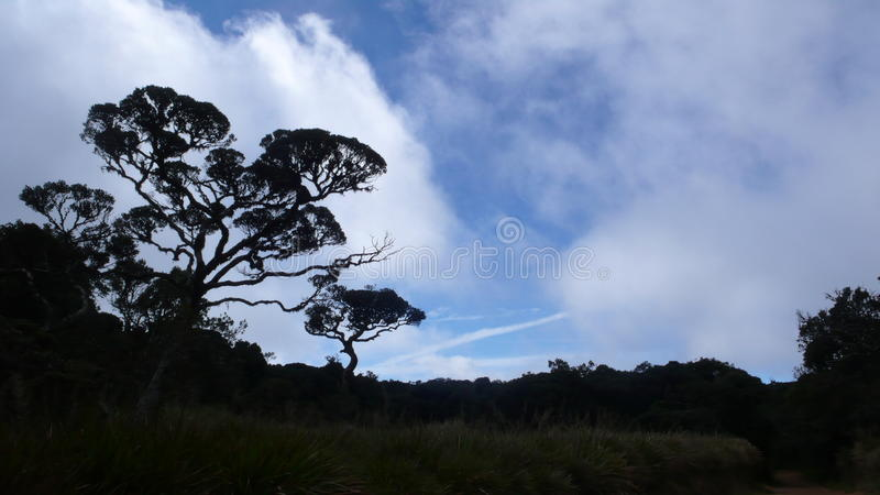 Mistskog med blåa coulds royaltyfria bilder