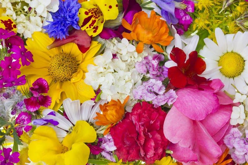 Mistura da colagem do verão - imaginação fotos de stock royalty free
